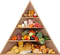 Food Pyramid Recommendations - My Plate in Seattle, WA