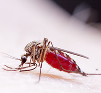 West Nile Virus (WNV) Treatment in Annapolis, MD