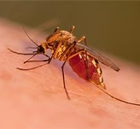 Malaria Treatment and Vaccination in Johnson City
